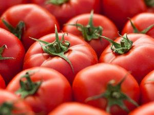 Tomato Time!Aug 29